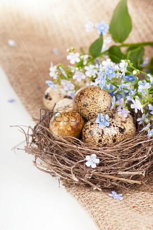Фотография на тему Перепелиные яйца и весенние цветы