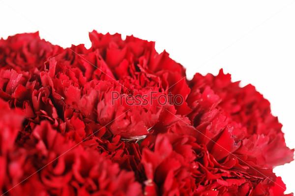 Фотография на тему Красивые цветы гвоздики