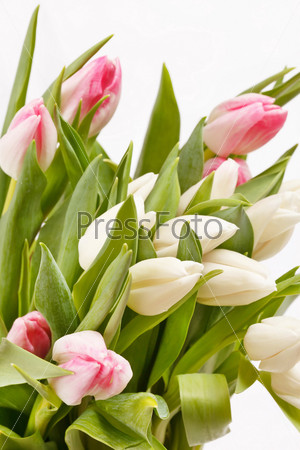 Фотография на тему Красивые тюльпаны