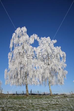 Фотография на тему Замерзшие деревья на фоне голубого неба
