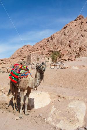 Фотография на тему Верблюд