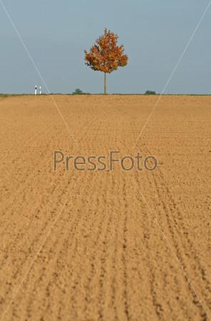 Фотография на тему Одинокое дерево на коричневом поле