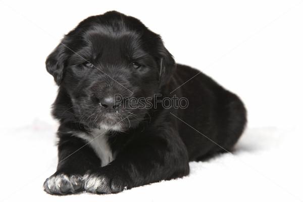 Фотография на тему Маленький щенок