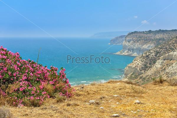 Фотография на тему Цветы на побережье моря