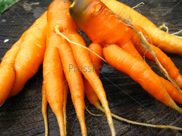 Рука с кучей моркови