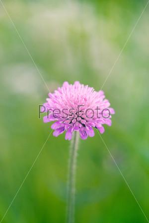 Лиловый цветок