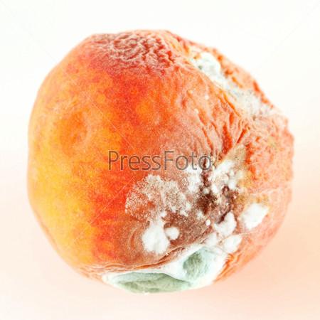 Фотография на тему Плесень на персике