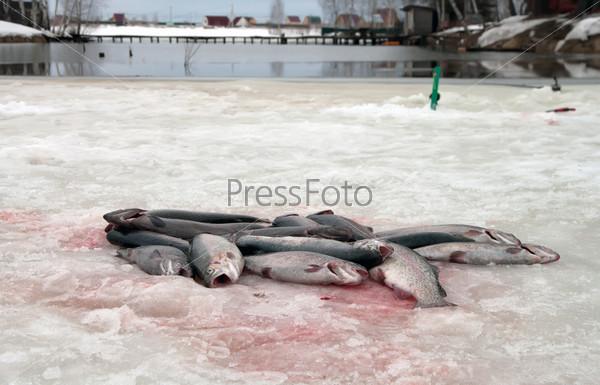Фотография на тему Зимняя рыбалка