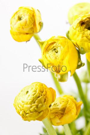 Желтые лютики