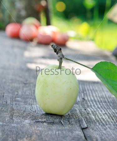 Свежие яблоки в саду