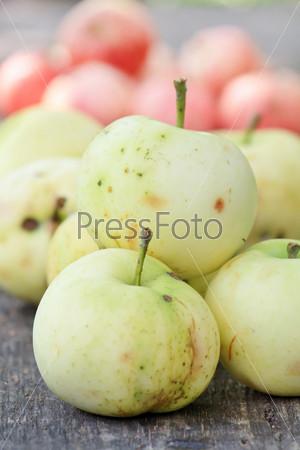 Фотография на тему Свежие яблоки в саду