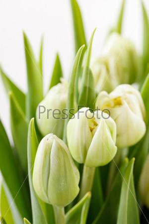 Фотография на тему Тюльпаны
