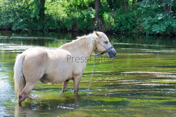 Лошадь пьет воду в реке
