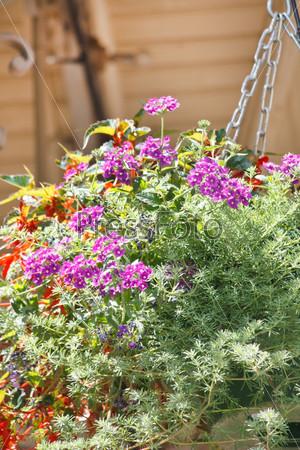 Летние цветочные корзины