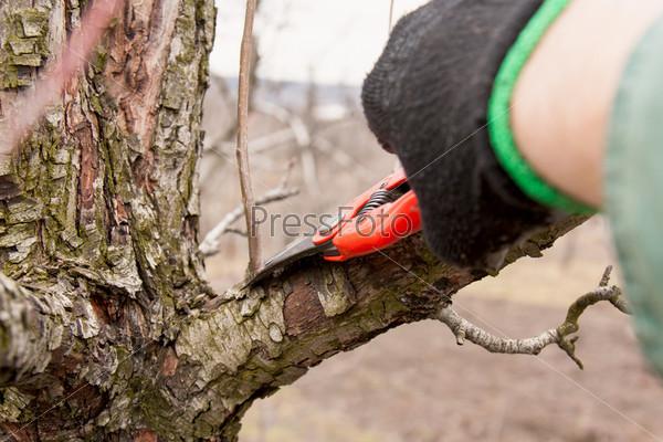 Фотография на тему Обрезка деревьев