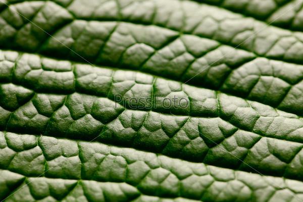 Зеленый лист, макро