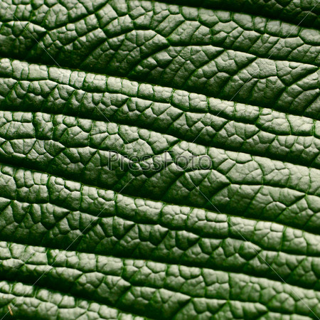Фотография на тему Зеленый лист, макро
