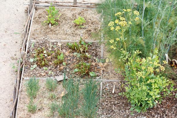 Овощной сад