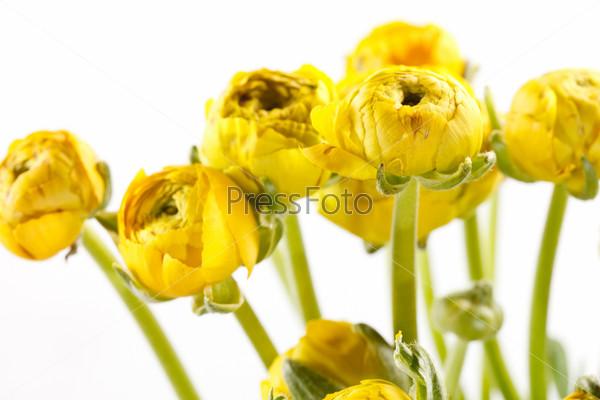 Фотография на тему Желтые лютики