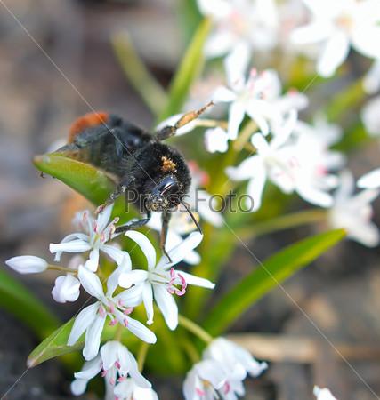 Фотография на тему Шмель на цветке