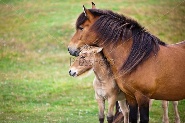 Гнедая лошадь и жеребенок на зеленом поле