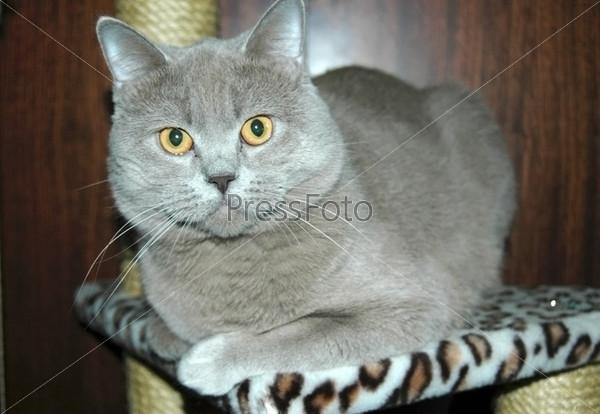 Серый кот на кошачьем домике
