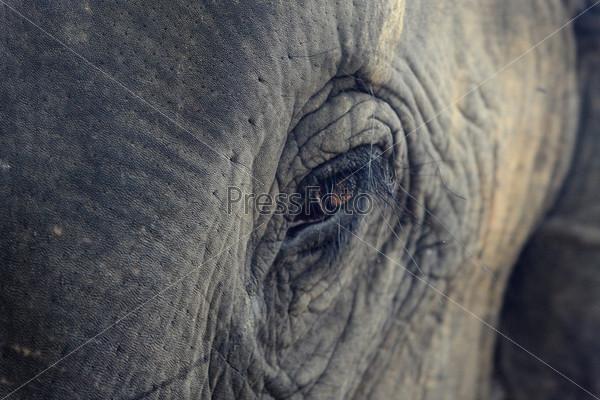 Слон. Читван, Непал