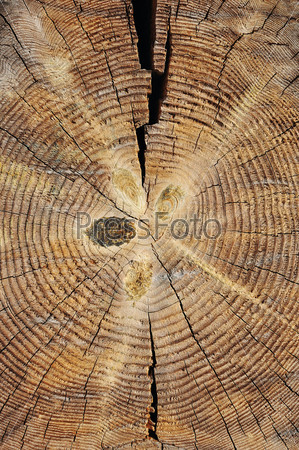 Фотография на тему Распиленное дерево