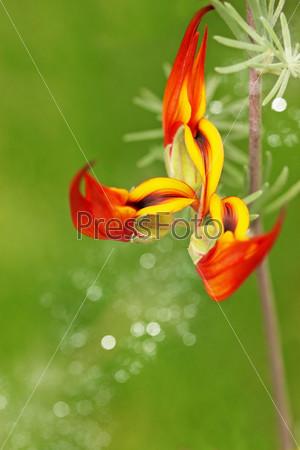 Оранжевый экзотический цветок