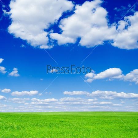 Зеленое весеннее поле