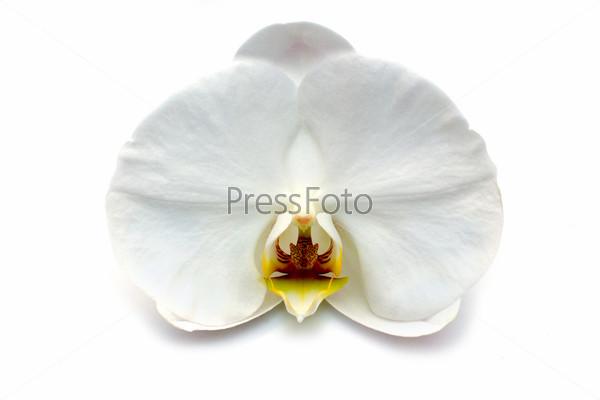 Фотография на тему Белая орхидея