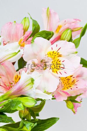 Букет с белыми и розовыми альстромериями