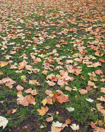 Осенний листопад в лесу