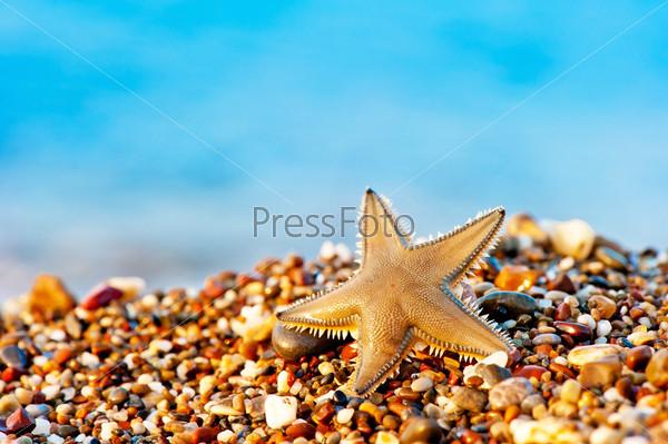Фотография на тему Морская звезда на песчаном пляже
