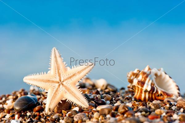 Морская звезда и раковина на песчаном и галечном пляже на берегу моря