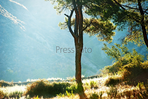Силуэт дерева в лучах солнца