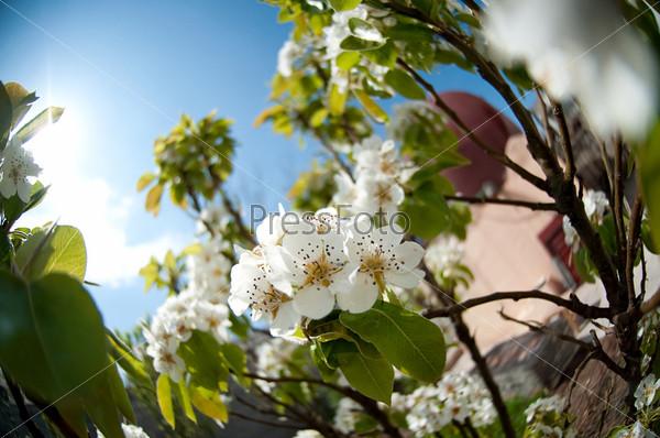 Белые весенние цветы