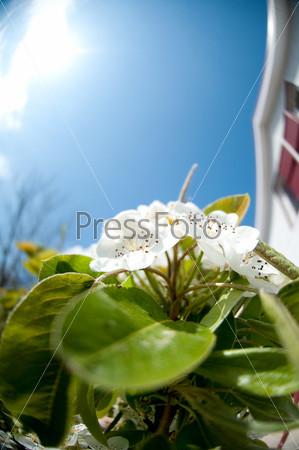 Фотография на тему Белые весенние цветы
