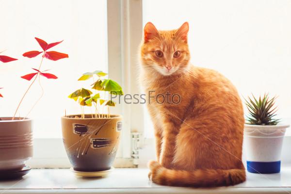 Фотография на тему Рыжий кот сидит на окне