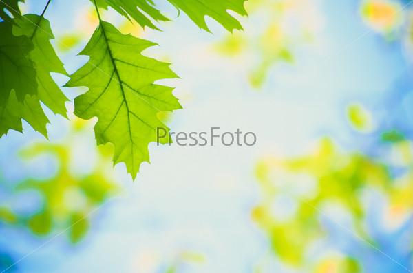 Зеленые листья на фоне неба