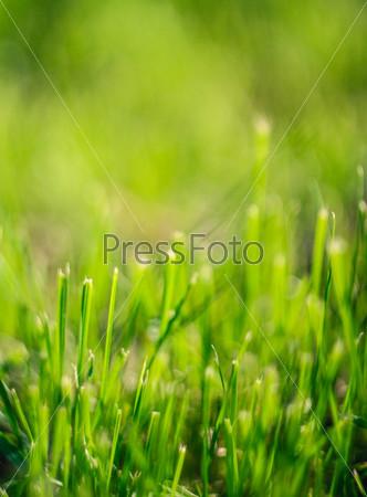 Свежая весенняя зеленая трава