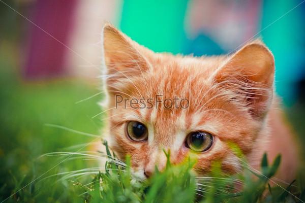 Молодой котенок охотится на зеленой траве