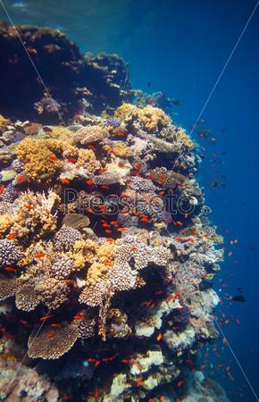 Край кораллового рифа