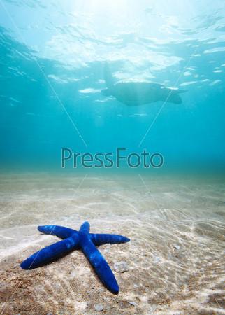 Голубая морская звезда глубоко под водой