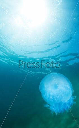 Медуза и поверхность воды