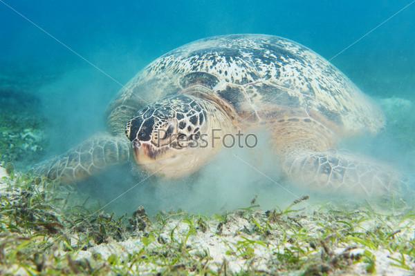 Черепаха и взвешенный песок