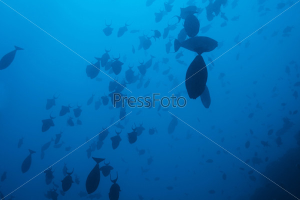 Фотография на тему Косяк рыб в глубоких водах