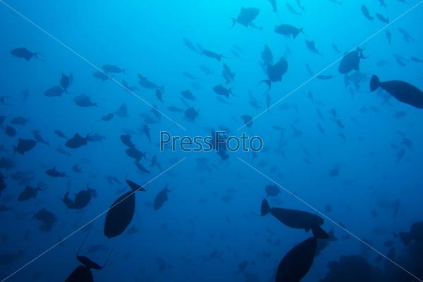 Фотография на тему Чудеса подводной жизни
