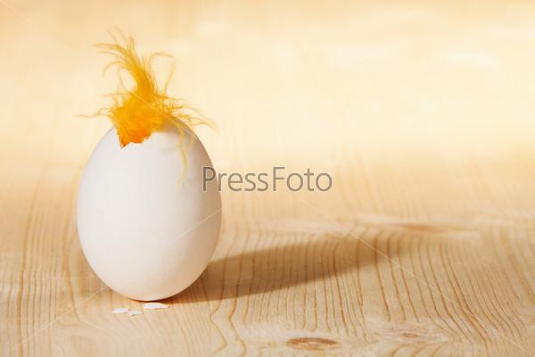 Фотография на тему Вылупляющийся цыпленок