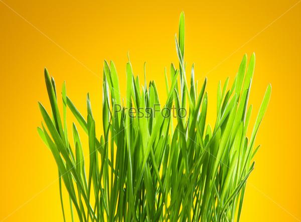 Зеленая трава на желтом фоне